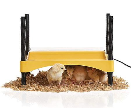 Brinsea Brooder Ecoglow heater for Chicks