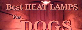 best heat lamps for dogs