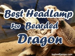 Best Heat Lamps for Bearded Dragon
